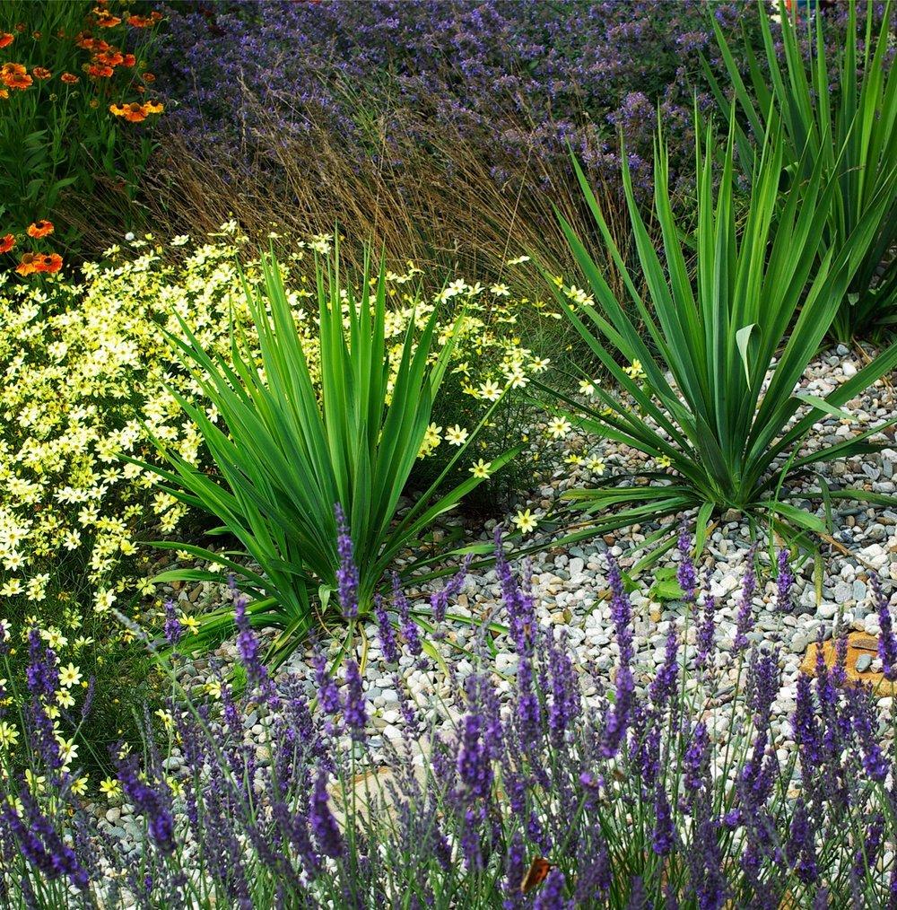 Struktury a textury hrubých a jemných rostlin.