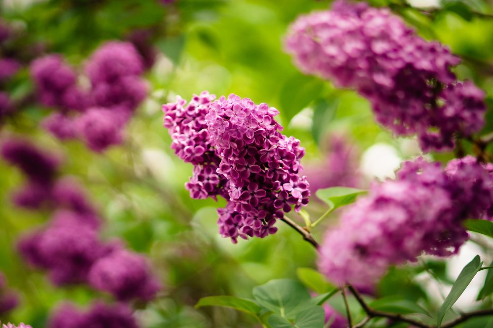 Zahrada je místo,   které voní přírodou.
