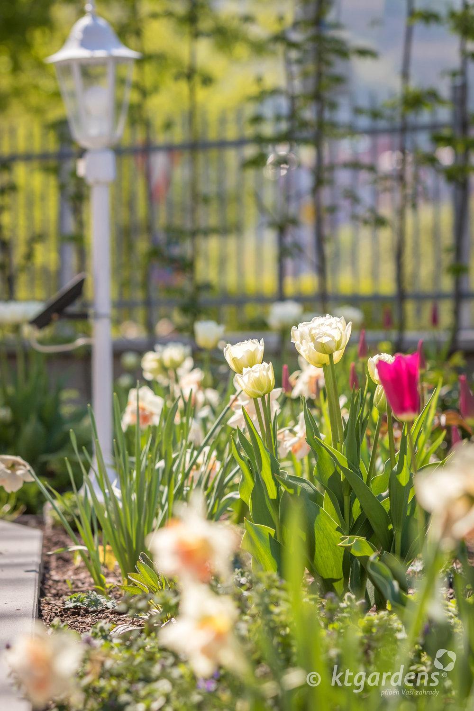 cibuloviny, narcisy, tulipány, vila Machů, Kopřivnice, ktgardens, zahrada