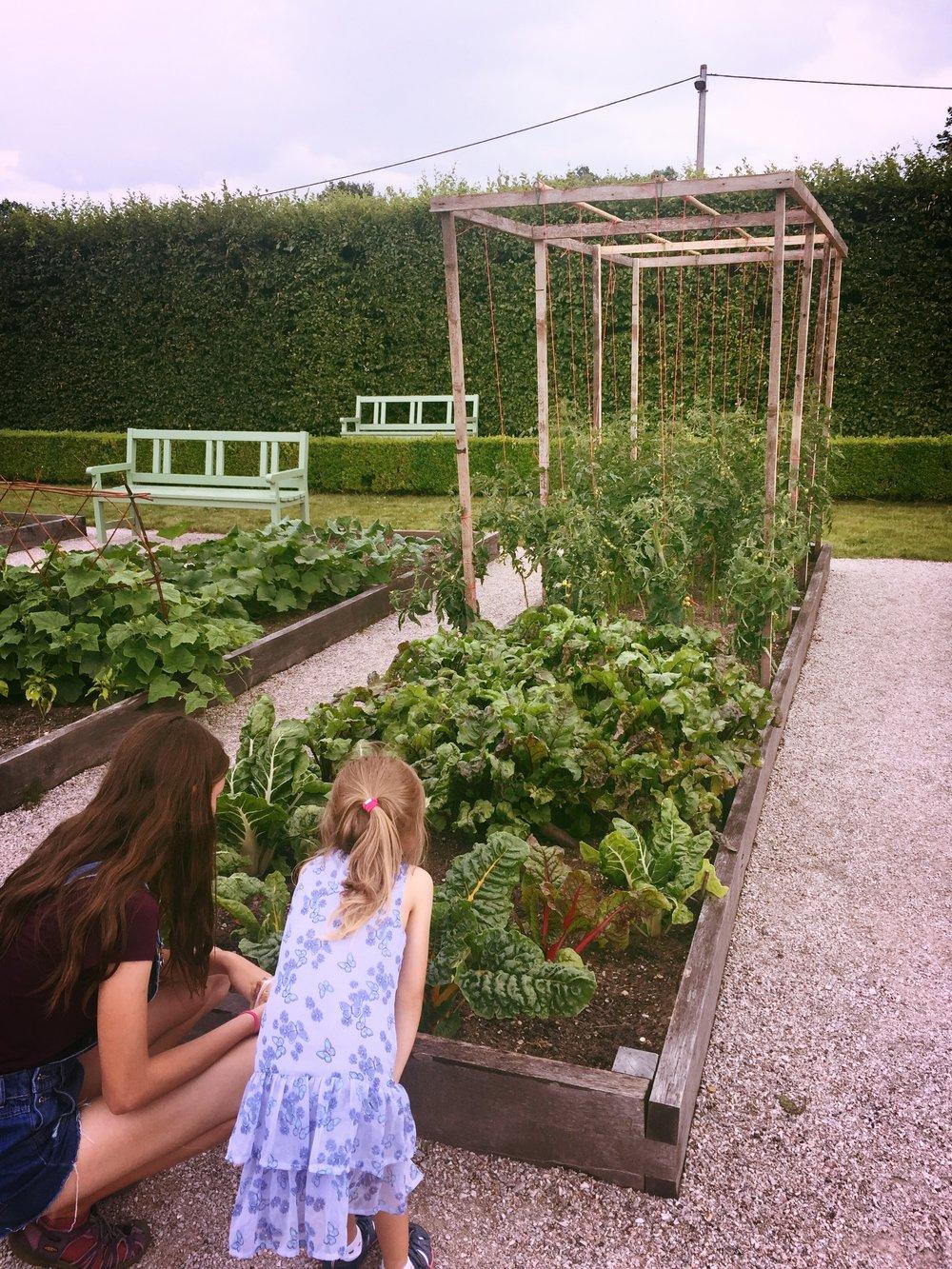 Bylinková zahrada Kuks