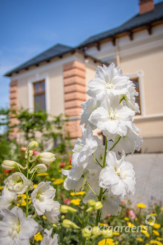 ostrožky, záhon, trvalky, zahrada, vila Machů, ktgardens, Kopřivnice