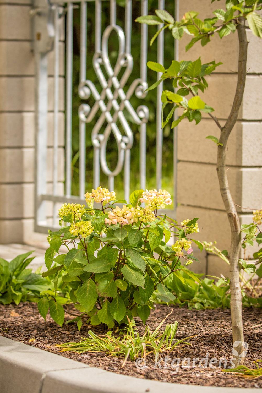 hortenzie, záhon, keře, zahrada, vila Machů, ktgardens, Kopřivnice