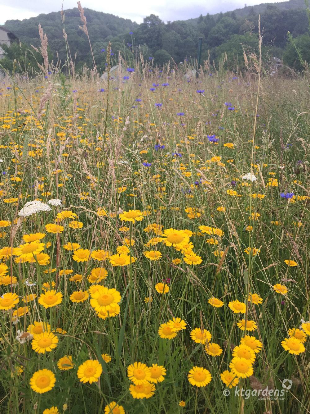 zahrada Štramberk, ktgardens, jaro, moderní zahrada