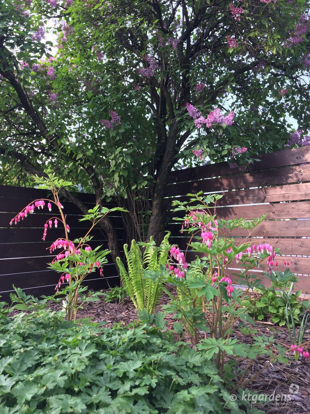 zahrada v Zelinkovicích, ktgardens, Monika Kořená, stinná zahrada