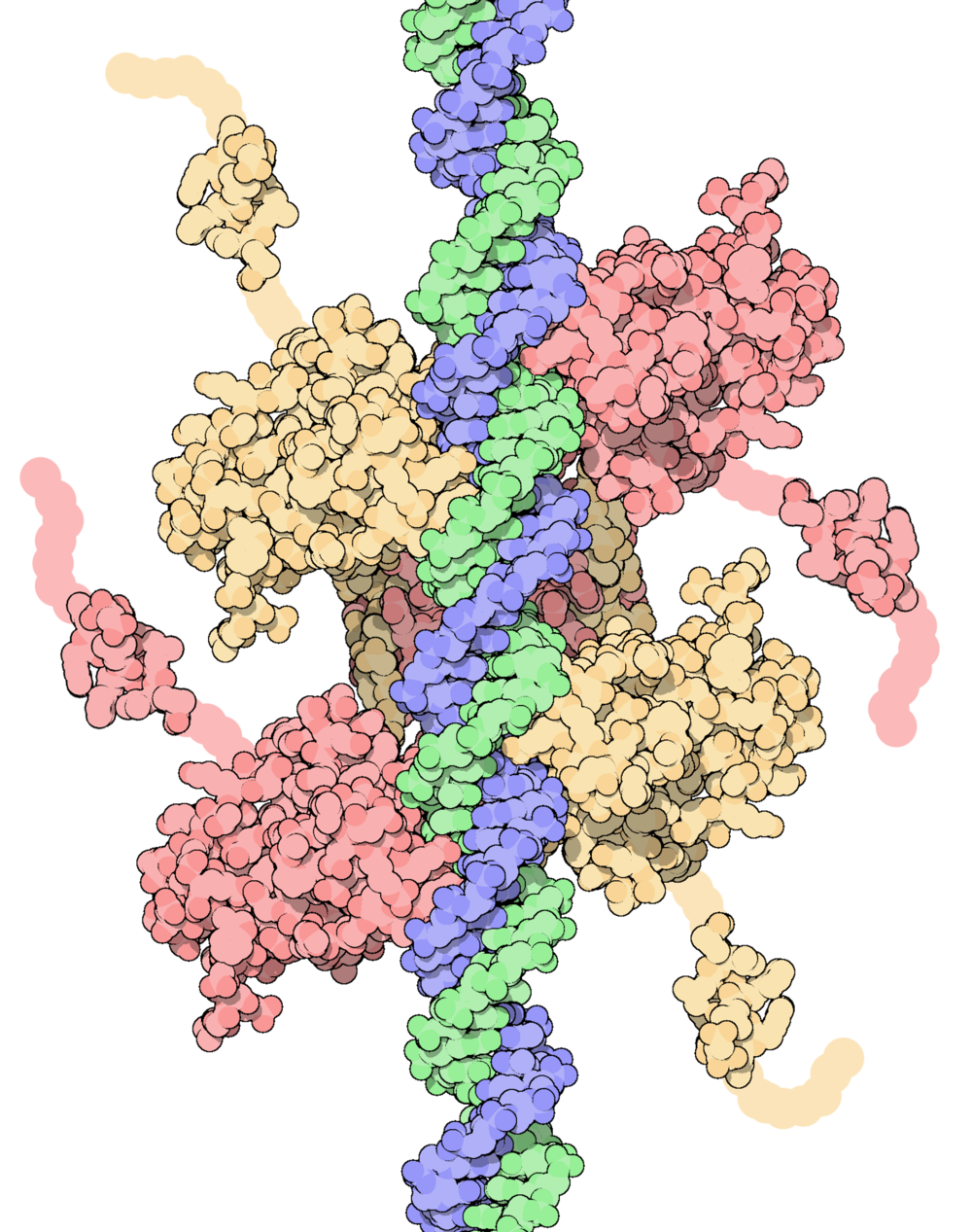 Model of p53 tumor suppressor bound to DNA.    RCSB PDB, July 2002, David Goodsell   .