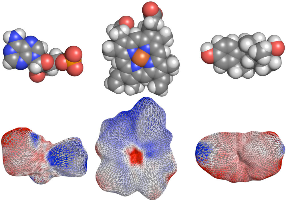 Electrostatic potential of proteins mapped on molecular surface of their ligands as represented by spherical harmonics.