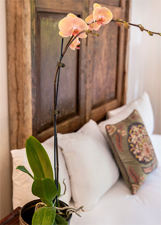 palm-springs-hotel-the-rossi-sedona-hacienda-orchid