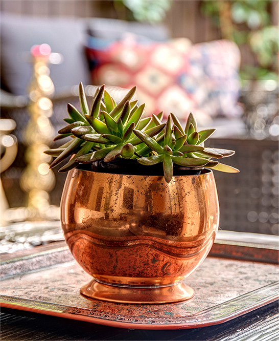 palm-springs-hotel-the-rossi-copper-planter