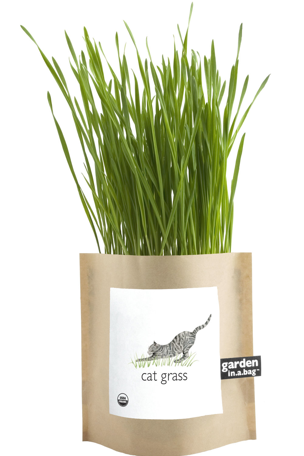 GIB Gr Cat Grass.jpg