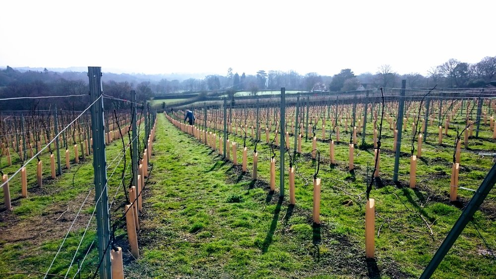 March 2017 - Pruning for harvest