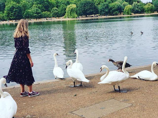 Naughty swan! 🙈