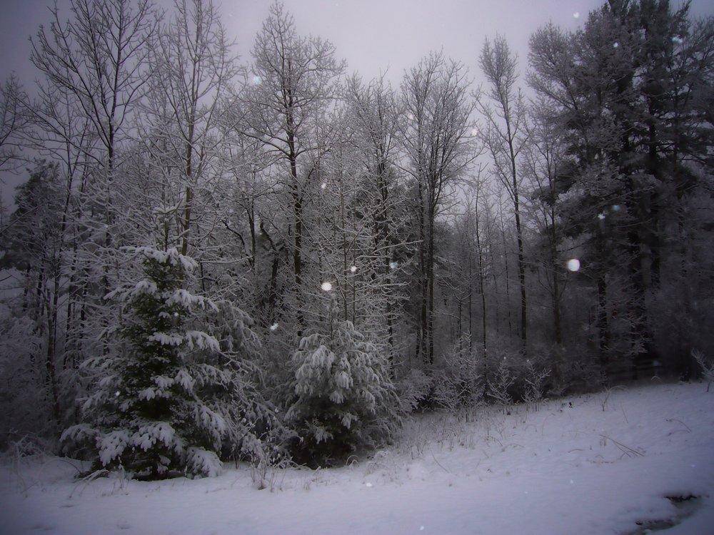snowy_evening2.jpeg