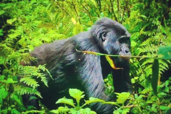 Kyaninga Lodge, Gorilla Trekking, Uganda
