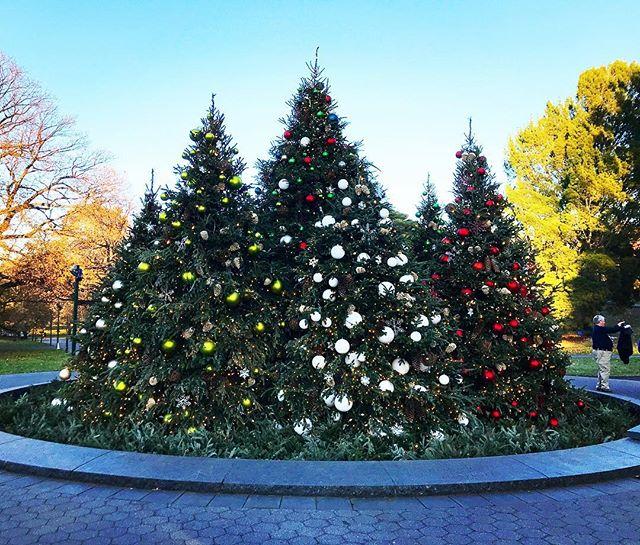 Christmas trees at @nybg !