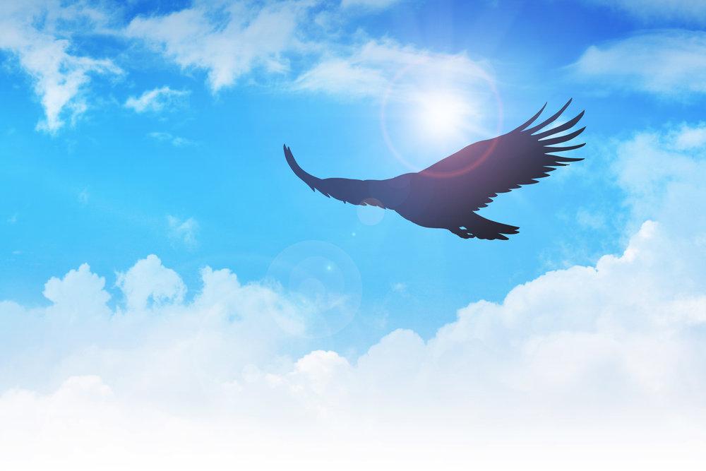 Eagle flying blue sky.jpg