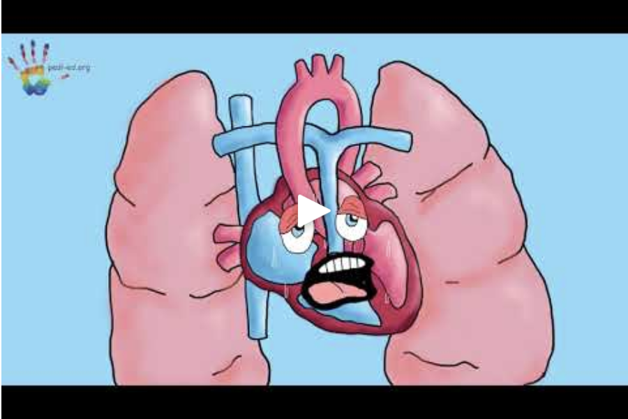 PDA - Wondering what a PDA is? Afi and Zozo will tell you all about it in this short video!