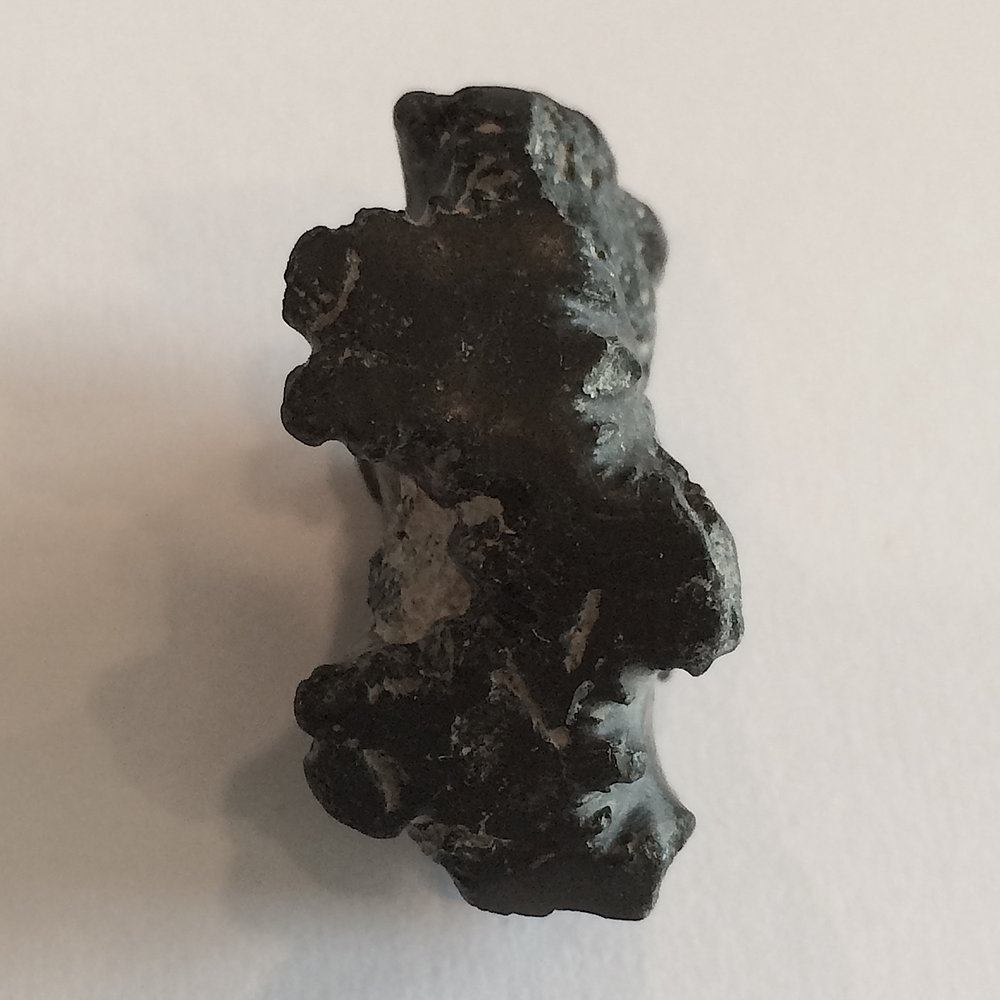 Baculite #551c Ozan Formation Ladonia, TX