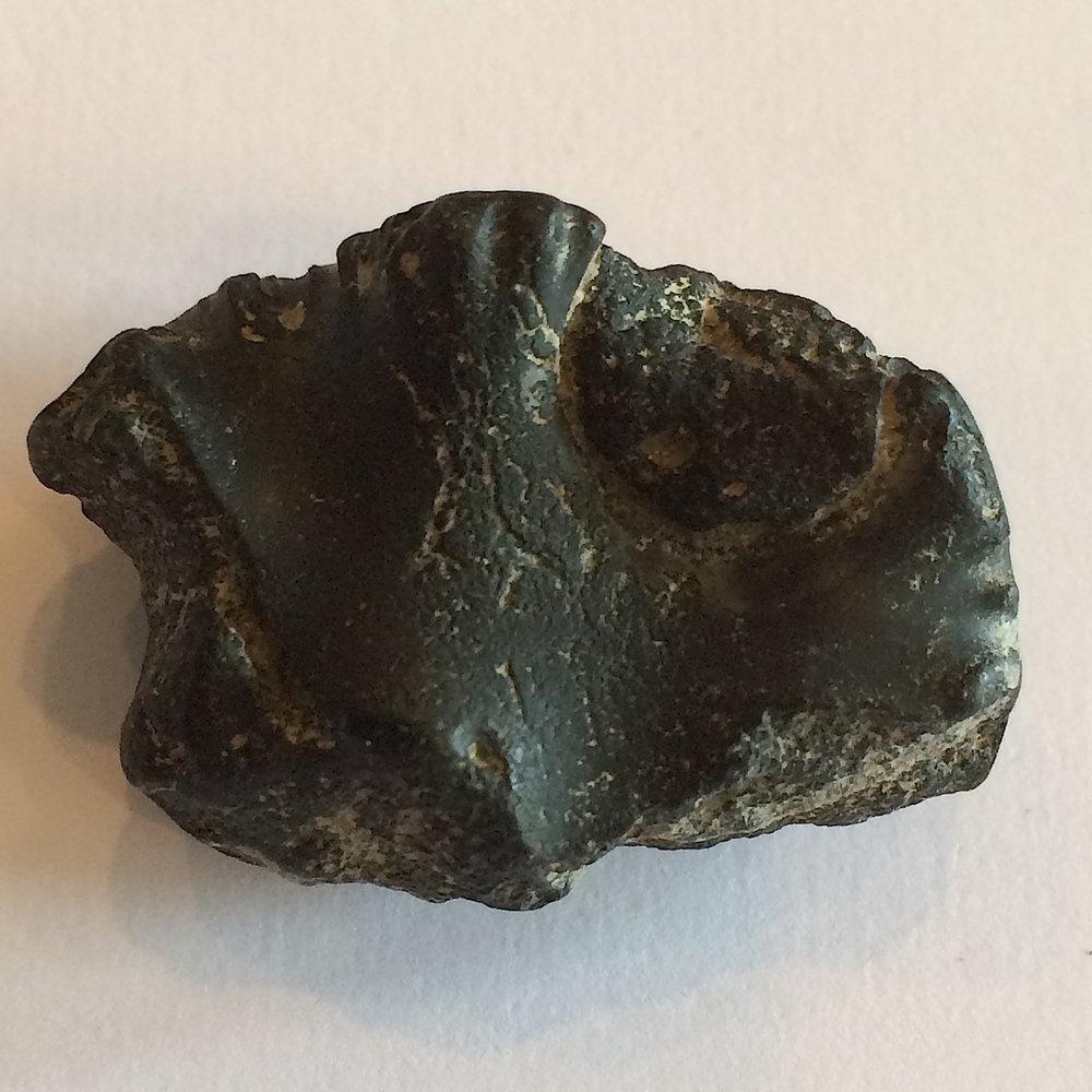 Baculite #551e  Ozan Formation  Ladonia, TX