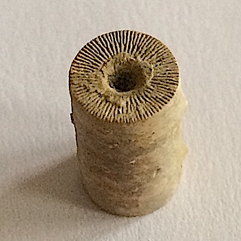 Crinoid Stem #300  Mineral Wells Formation  Mineral Wells, Palo Pinto Co., TX