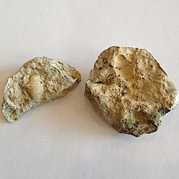 Tylostoma tumidum #122  Comanche Peak Formation  Hood Co., TX