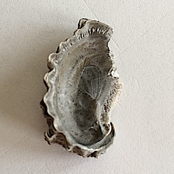 Oyster #388 Walnut Clay Formation Hood Co., TX