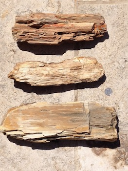 Petrified Wood Paluxy Sand Formation Hood Co., TX
