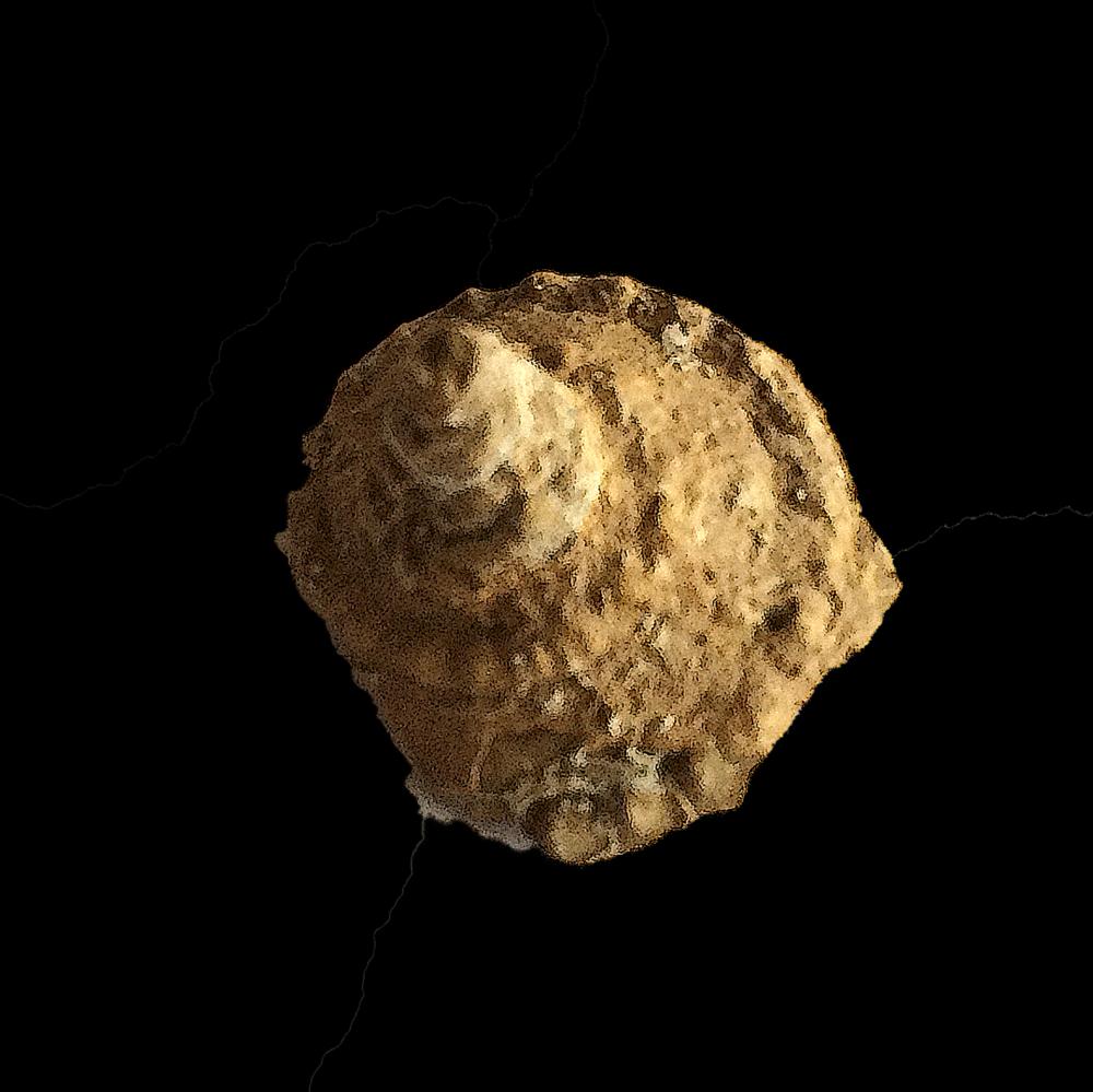 Worthenia tabulata #454  Graham Formation (Finis Shale)  Jacksboro, Jack Co., TX