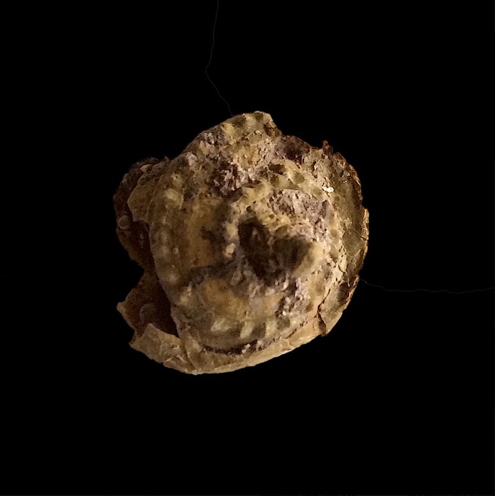 Worthenia tabulata #454b  Graham Formation (Finis Shale)  Jacksboro, Jack Co., TX