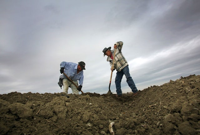 "Jose Ortega, left and Fidel Meza work the soil in Lemoore, Calif. The state's new Healthy Soils Initiative gives money to farmers and ranchers to experiment with building healthy soil for ""carbon farming.""AP/Gary Kazanjian"