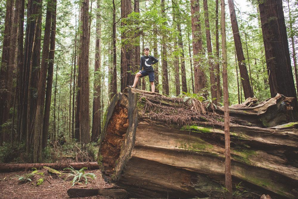 Redwoods-31.jpg
