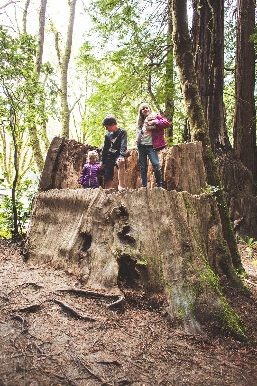 Redwoods-35.jpg