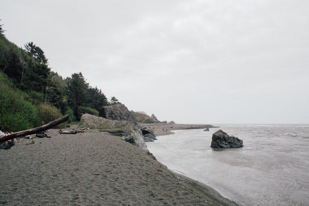 Redwoods-72.jpg