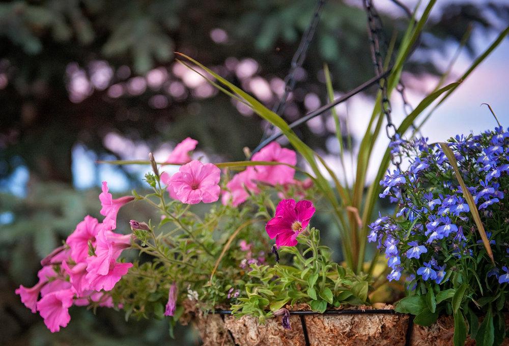 June flowers-1632.jpg