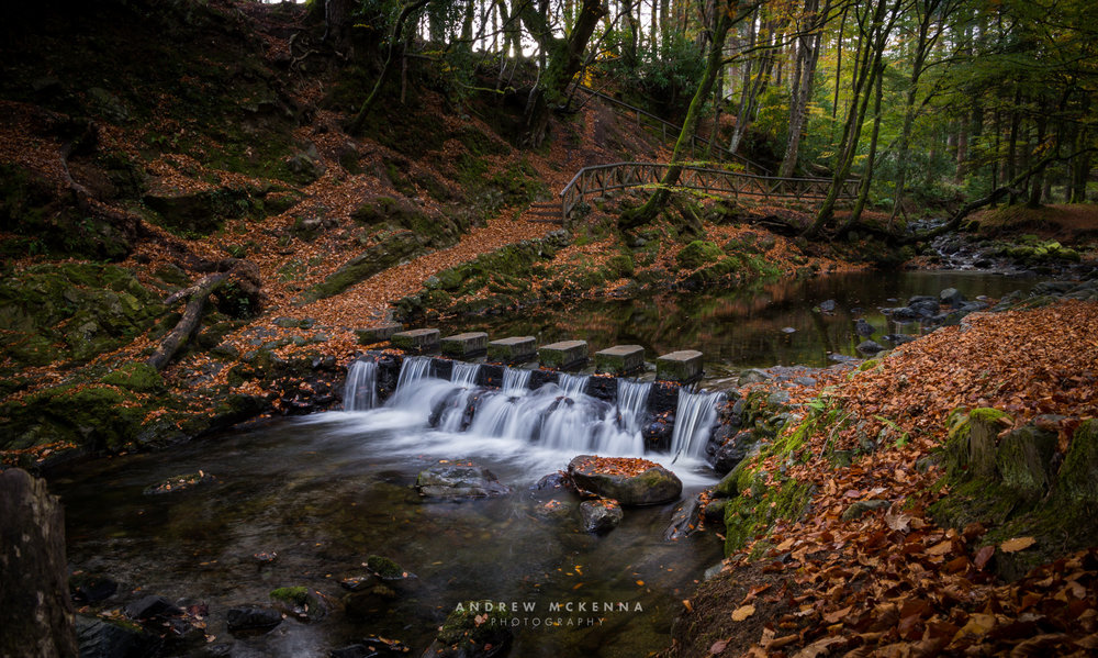 The Stepping Stones at Tollymore Forest Park