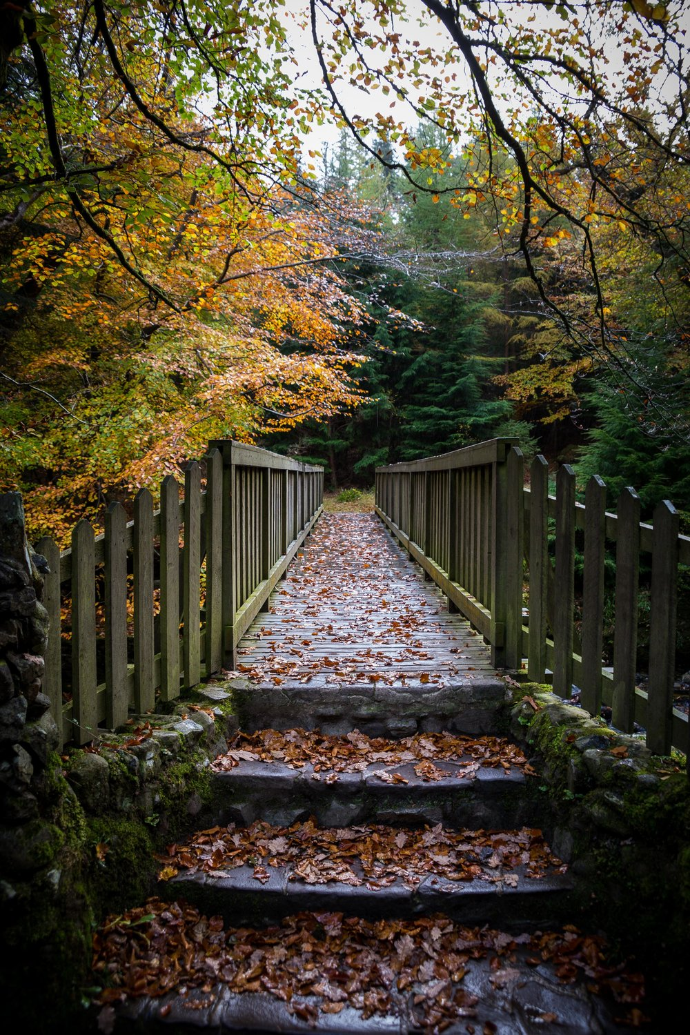 wooden Bridge at Tollymore Forest Park