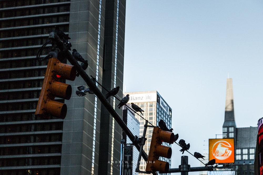 New York NYC Photographer Travel photographer street traffic sig