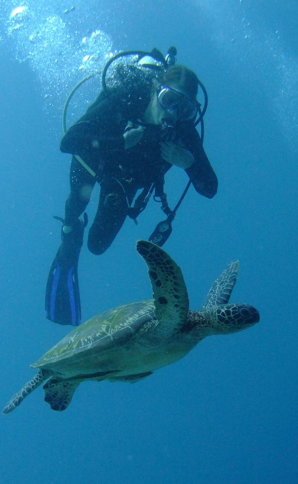 turtle 01 copy.jpg