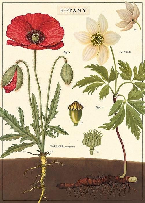 Botany Wrap