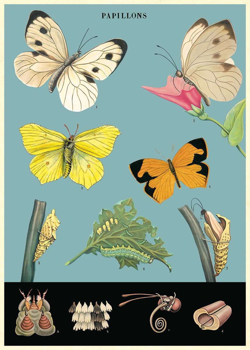 Butterflies 2 Wrap