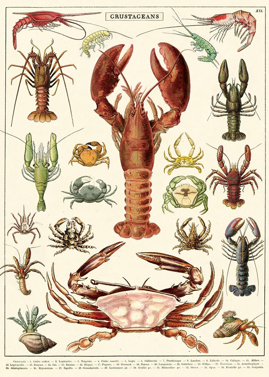 Crustaceans Wrap