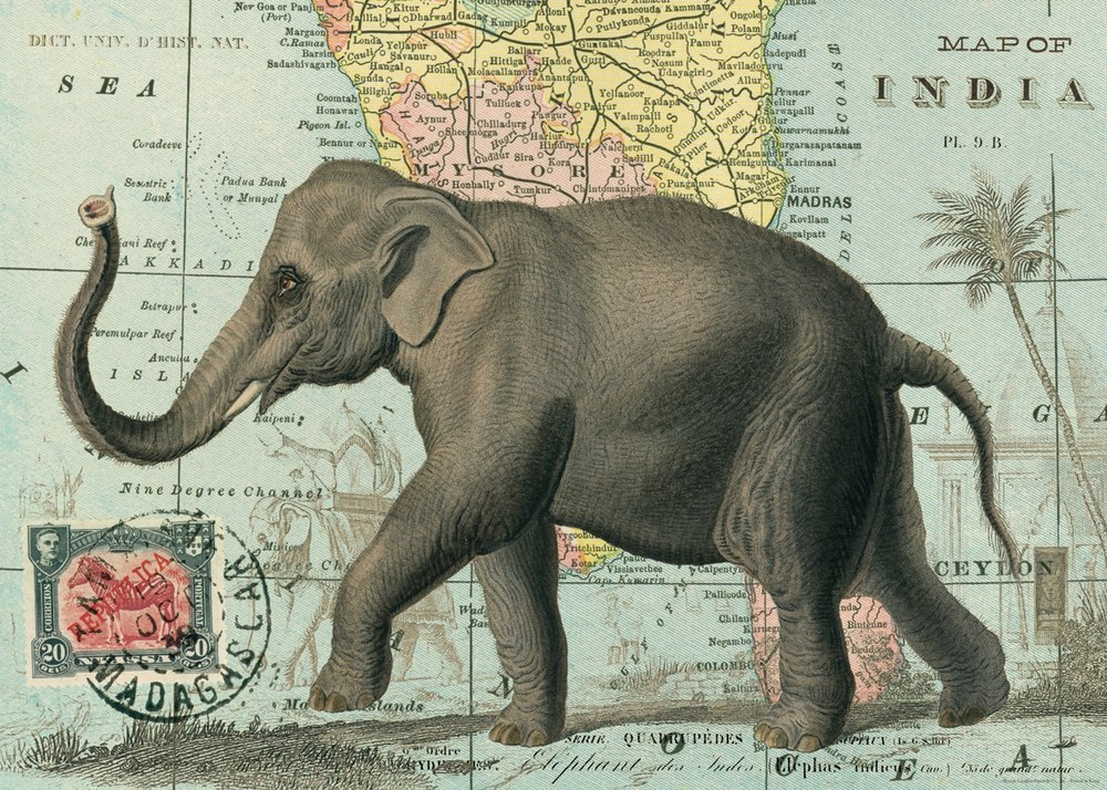 Elephant Wrap