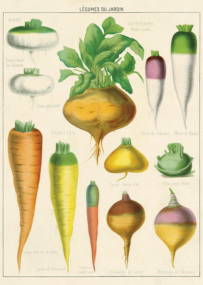 Legumes du Jardin Wrap
