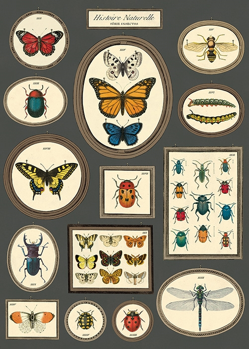 Natural History Butterflies & Insects 3 Wrap