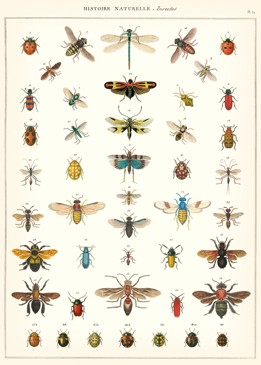 Natural History Insects Wrap