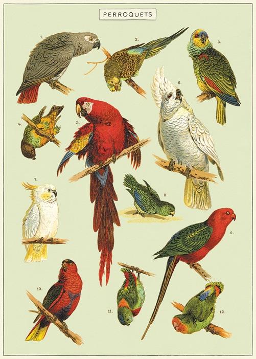 Parrots Wrap