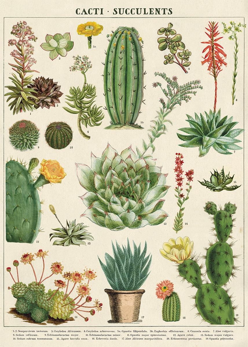 Cacti & Succulents Wrap