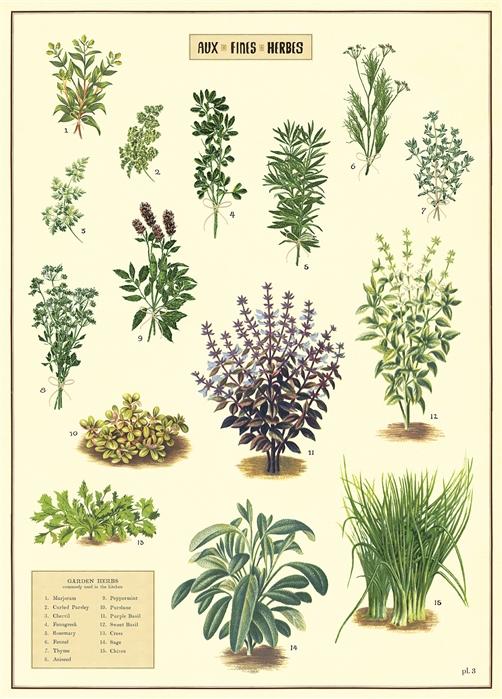 Kitchen Herbs Wrap