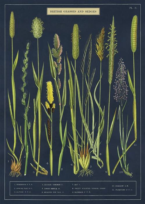 Grasses & Sedges Wrap