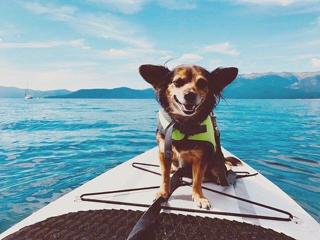 Being out here on the west coast without our babies sure isn't the same... missing our little pup-paddleboarder. Be home soon Chelsea & Millie 💛🐶🐾 . . . . . #homeiswhereyouparkit #stillness #namaste #sunshine #joy #roadlife  #travel #travelphotographer #vanlifemovement #love #earthpix #photojournalism #minimalist #pupsofinstagram #paddleboardpup #paddleboarddog #mansbestfriend #vanlife #vanlifers #vanlifemovement #vanlifestyle #vanlifediaries #projectvanlife #vanlifeexplorers #vanlifesociety #homeonwheels #vanlifeideas #wanderlust #vanlifedistrict #ontheroad