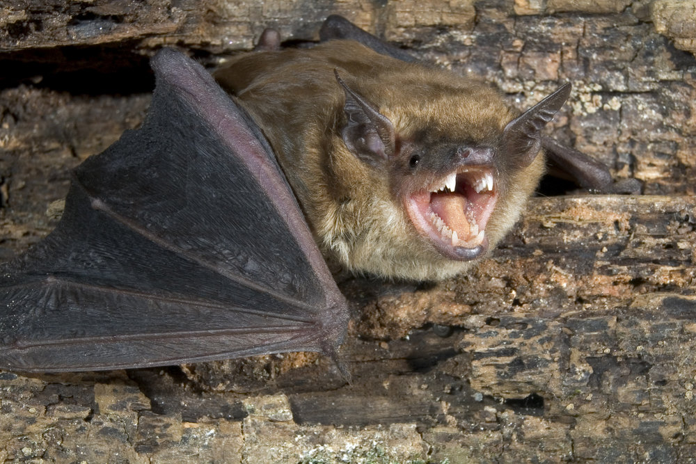 Bats in the mines